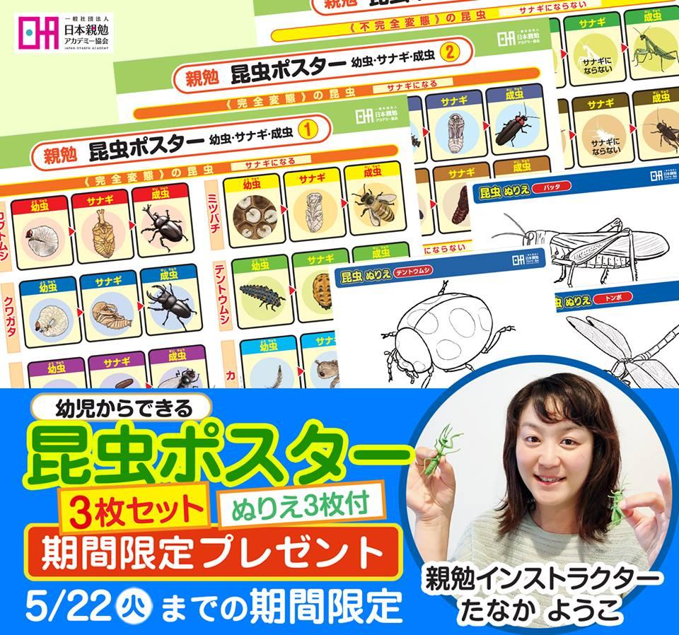 たなかようこ親勉インストラクター【香川】昆虫ポスター3枚セット、無料プレゼント