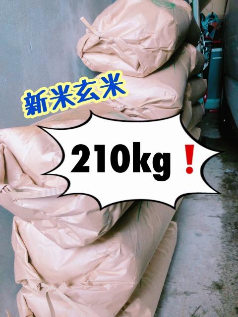 我が家のお米1年間分、新米玄米210㎏ 自然栽培米 北海道 地球まるごと遊び場に