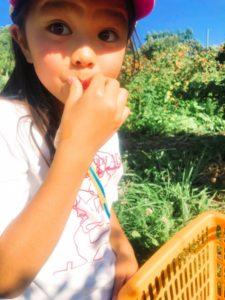子どもと一緒にフルーツ狩り、果物狩り、ピッキング。北海道余市。美味しすぎて、目がまん丸。